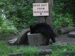 Bear Bait from Seed N Feed