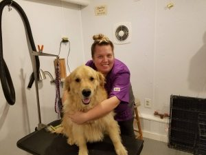 Professional Pet Grooming Services